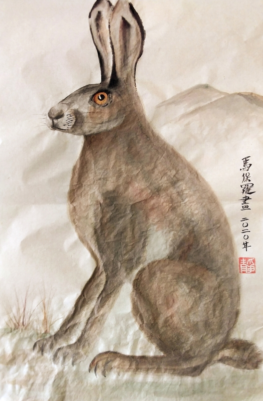 Spring Hare study by Paul Maslowski 2020