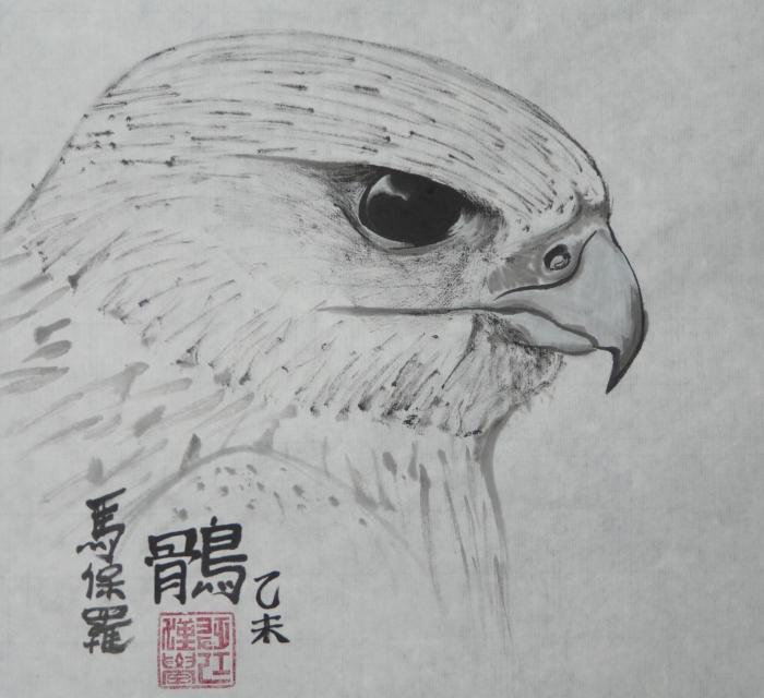 Gyr falcon head study by Paul Maslowski 2015