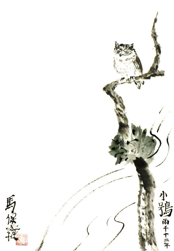 Little Owl in tree - Paul Maslowski 2012
