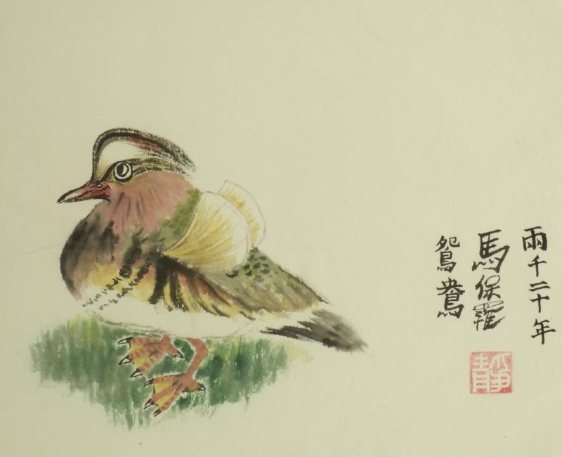 Mandarin Duck study by Paul Maslowski 2012