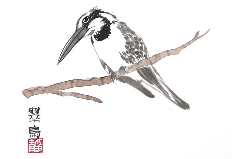 Pied Kingfisher by Paul Maslowski 2011