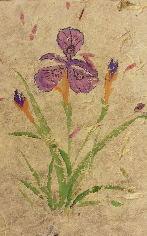 2020-09-27 Purple Iris
