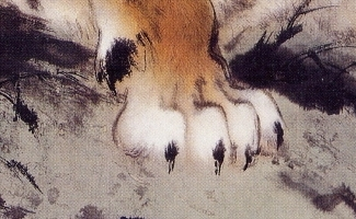 Paw - Tiger family detail